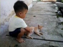 Main kucing